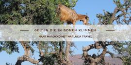 geiten die in bomen klimmem