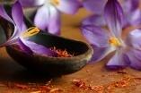 meeldraden crocus sativus