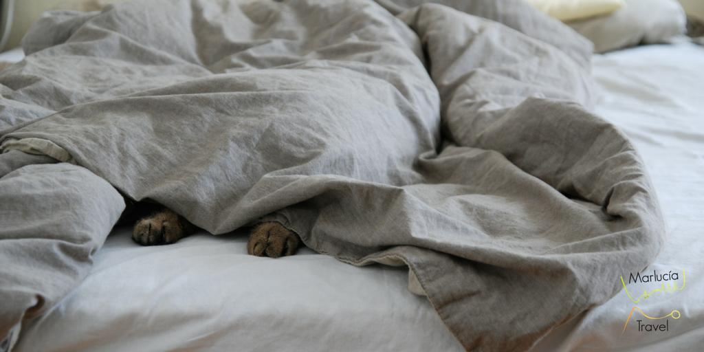 vakantiegevoel thuis kat in bed